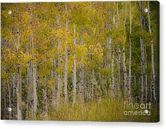 Dreaming Of Fall Acrylic Print