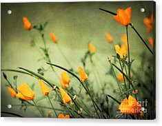 Acrylic Print featuring the photograph Dreaming Of Spring by Ellen Cotton