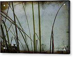 Acrylic Print featuring the photograph Dreaming Of Summer by Chris Armytage