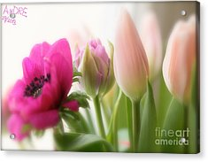 Dreaming Of You....spring Flower ... Feelings Of Love. Acrylic Print by  Andrzej Goszcz