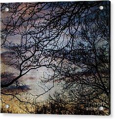 Dreamy 2 Acrylic Print by Judy Wolinsky