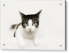 Dreamy Cat Acrylic Print by Andee Design
