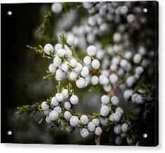 Dreamy Dark Juniper Berries Acrylic Print by Lisa Russo