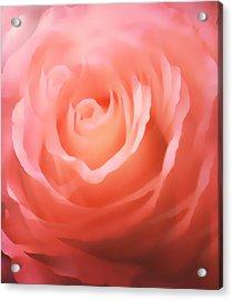 Dreamy Pink Rose Acrylic Print