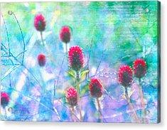 Dreamy Red Spiky Flowers 2 Acrylic Print by Karen Stephenson