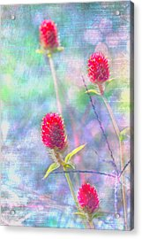 Dreamy Red Spiky Flowers Acrylic Print by Karen Stephenson