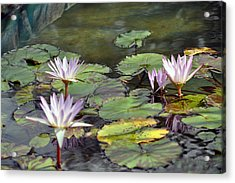 Dreamy  Water Lillies Acrylic Print by Judith Russell-Tooth