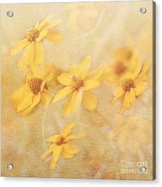 Dreamy Yellow Coreopsis Acrylic Print