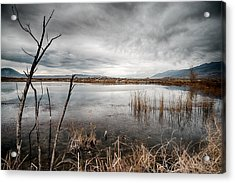 Dreary Acrylic Print by Cat Connor