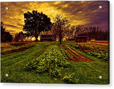 Dreary Farm Day Acrylic Print