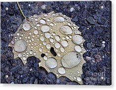Drenched Leaf Acrylic Print
