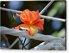 Dressed For A Holiday Acrylic Print