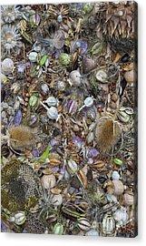 Dried Flower Seeds Acrylic Print by Tim Gainey
