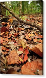 Dried Leaves On The Ground Acrylic Print by � Marcela Montano - Vwpics