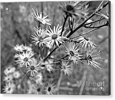 Dried Out Perfection Acrylic Print