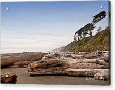Drift Logs Tossed Like Pick-up Sticks Upon Pacific Coast Beach Acrylic Print