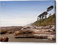 Drift Logs Tossed Like Pick-up Sticks Upon Pacific Coast Beach Acrylic Print