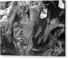 Drift Wood Cove Acrylic Print