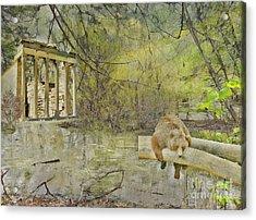 Drifter Acrylic Print by Liane Wright