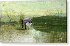Drifter Acrylic Print by Mike Breau