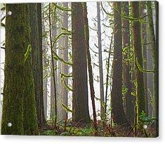 Drifting Light Acrylic Print by Steve Battle