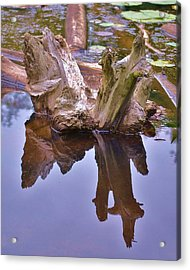 Drifting Reflections Acrylic Print by Mary Zeman