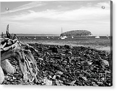 Driftwood And Harbor Acrylic Print