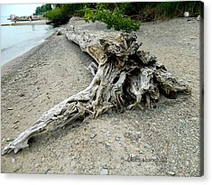 Driftwood At Lake Erie Acrylic Print by Kathy Barney