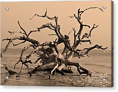 Driftwood Beach Jekyll Island Acrylic Print