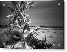 Driftwood At Race Point Acrylic Print