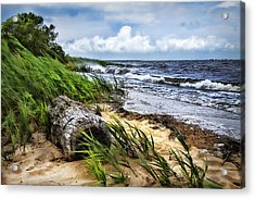Driftwood By The Sea Acrylic Print by Trudy Wilkerson