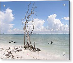Acrylic Print featuring the photograph Driftwood by Carol  Bradley