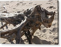 Acrylic Print featuring the photograph Driftwood Creature I by Amanda Holmes Tzafrir