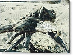 Acrylic Print featuring the photograph Driftwood Creature II by Amanda Holmes Tzafrir