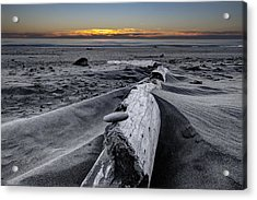 Driftwood In The Sand Acrylic Print by Debra and Dave Vanderlaan