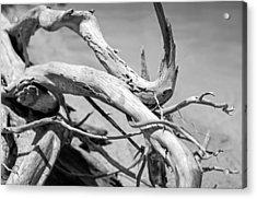 Driftwood Acrylic Print by Jonathan Gewirtz