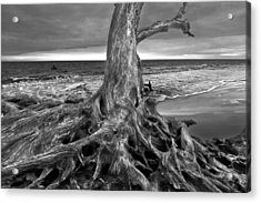 Driftwood On Jekyll Island Black And White Acrylic Print by Debra and Dave Vanderlaan