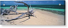 Driftwood On The Beach, Green Island Acrylic Print