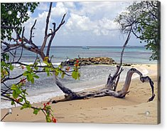 Driftwood On The Beach In Barbados Acrylic Print by Willie Harper