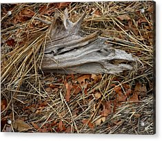 Driftwood On The Shore Acrylic Print by Kate Gallagher