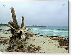 Driftwood Acrylic Print by Tamyra Crossley