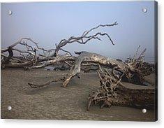 Driftwood Trees On Jekyll Island Acrylic Print