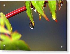Drip Drop Acrylic Print