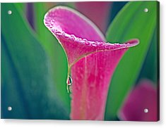 Dripping Acrylic Print by Joan Herwig