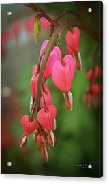 Dripping With Love Acrylic Print by Mary Machare