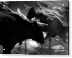 Driven Acrylic Print by Fred Lassmann