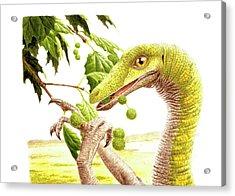 Dromiceiomimus Dinosaur Acrylic Print