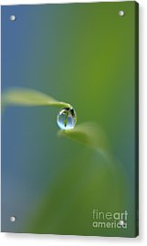 Drop 2 Acrylic Print by Rebeka Dove