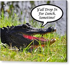 Drop In For Lunch Greeting Card Acrylic Print by Al Powell Photography USA