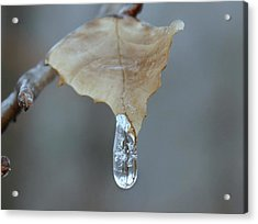 Drop Of Ice Acrylic Print by Candice Trimble